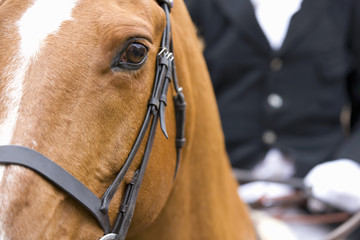 Close-up of horse's head with rider in background