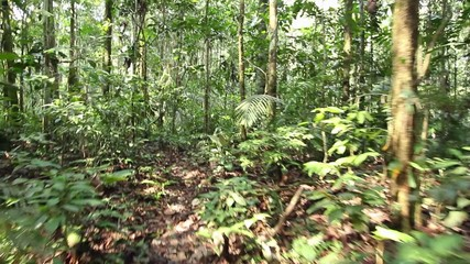 Running through tropical rainforest in Ecuador