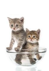 couple of little kittens