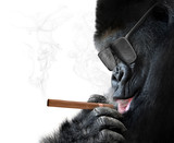 Badass gorilla with cool sunglasses smoking a cigar like a boss