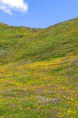 Prato fiorito di fiori gialli e rosa