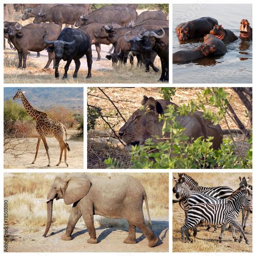 Fotobehang Buffel Safari in Tanzania - Africa