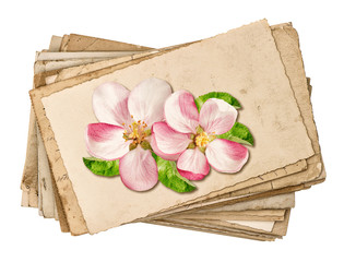 Vintage postcards with apple tree blossom isolated on white