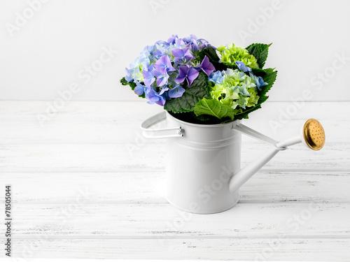 Hydrangea in bailer