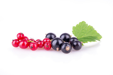 red currant and black currant on a white background