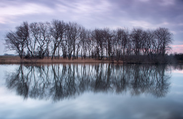 Bomen in spiegelbeeld