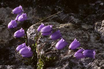 fiori sulla scogliera