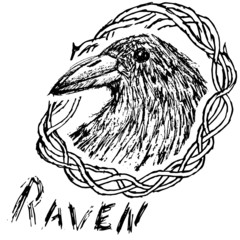 Crow raven handdrawn sketch in blackthorn  isolated on white