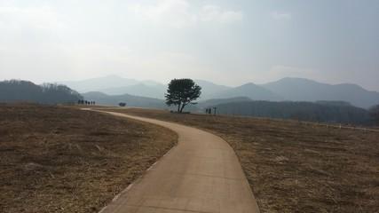 Scenery road