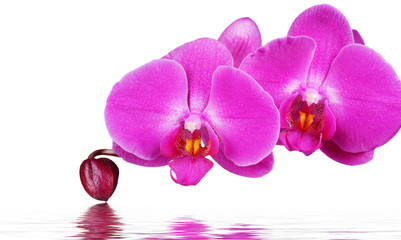 Orchid and reflection on white background