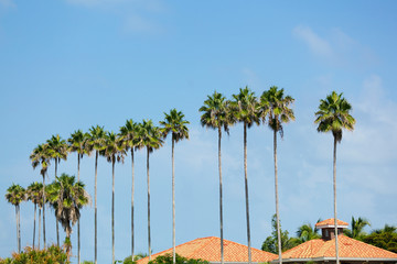 Palm Trees Row