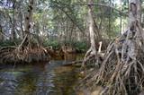 Manglar en Celestun - Yucatán - México
