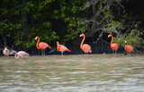 view of pink flamingos