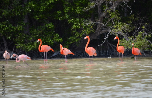 Papiers peints Flamant view of pink flamingos