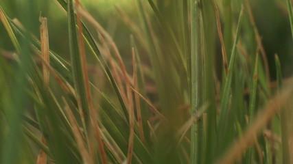 Macro clip of grass during sunrise