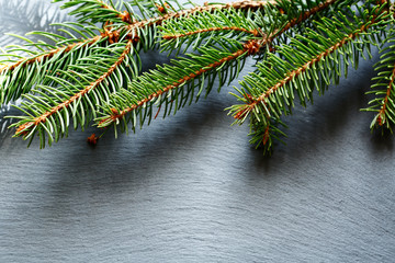 Christmas pine branch on slate background