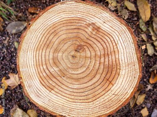 Leinwanddruck Bild Jahresringe eines Baumes