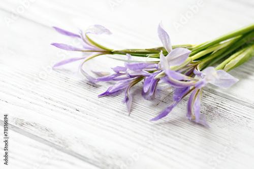 Fotobehang Iris Beautiful flowers on a blackboard