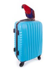 Papagei auf Koffer