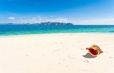coquillage sur plage de Thaïlande