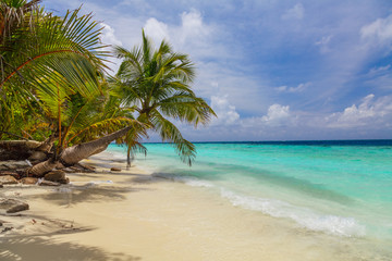 Palm tree on the shore of the Maldives