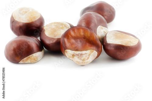 canvas print picture Frucht bzw. Samen der Gewöhnlichen Rosskastanie