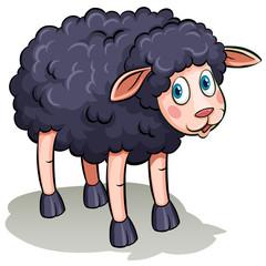 A black sheep