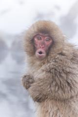風呂にはいる日本猿の子 Child of the Japanese monkey which takes a bath