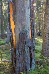 Sunbeam on the bark