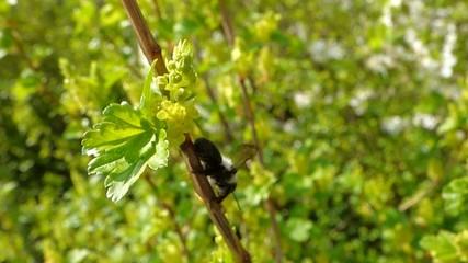 Black bee on tree