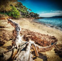 white driftwood in Mugoni shoreline