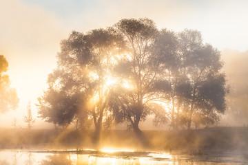 Misty Solar Dawn near the river Seversky Donets
