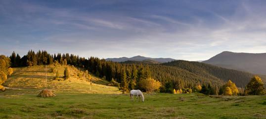 Grazing horse on Carpathian hill