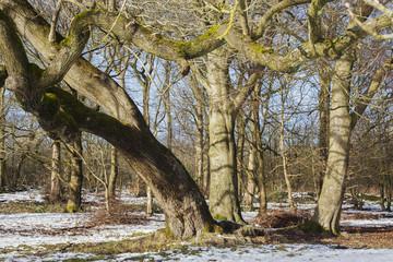 Winter Tres in Frozen Landscape