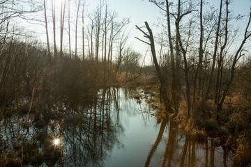 Sumpflandschaft mit Wasser