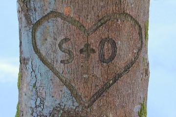 Liebesherz in der Baumrinde