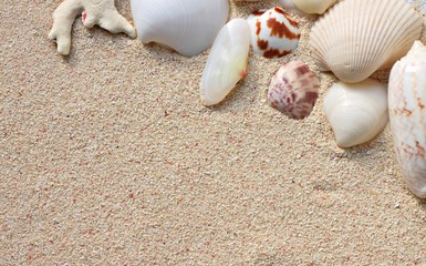 Seashells on beige sand background