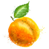 Apricot vector logo design template. Peach or fruit icon.
