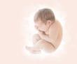 Leinwandbild Motiv Newborn Baby, New Born Kid in Ninth Month Embryo, Human Fetus, U