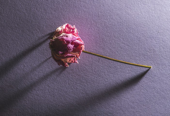 Withered flower