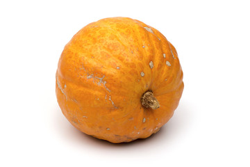 pumpkin on the white background