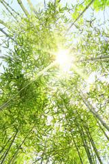 Foresta di bambù con raggi di sole che entrano dalla chioma