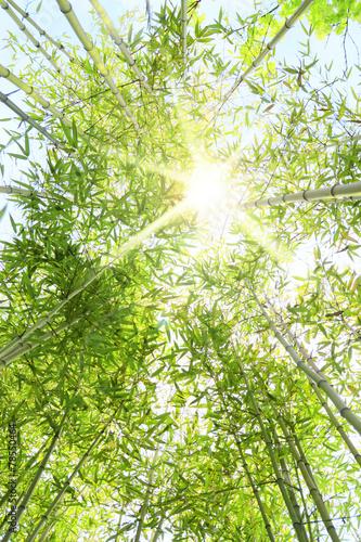 Foto op Plexiglas Bamboe Foresta di bambù con raggi di sole che entrano dalla chioma