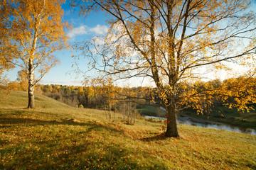 Пейзаж осень вечер березы берег река