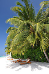 Beautiful tropical beach with palms and sunbeds