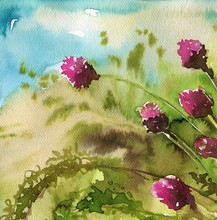 clover, rosy,