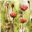 poppies - 78552684