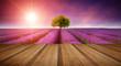 Stunning lavender field landscape Summer sunset with single tree