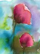poppies, red,
