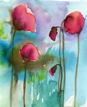 cover, poppies, red